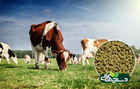 کنسانتره گاو کم شیر