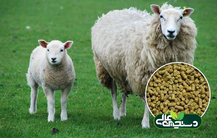 کنسانتره گوسفند داشتی