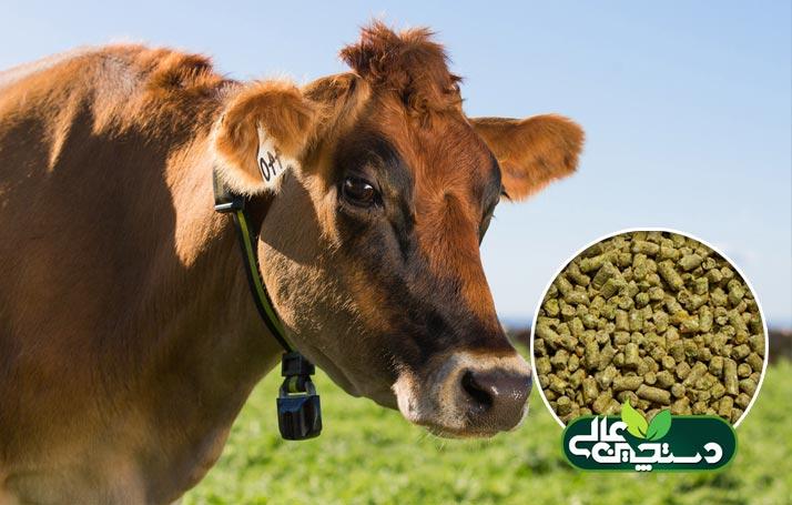 کنسانتره گاو متوسط شیر