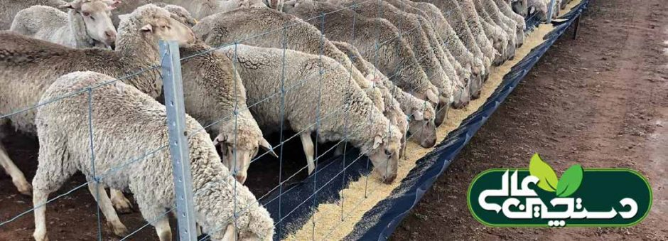 پرورش گوسفند و بز باید علمی شود تا رونق و سود افزایش یابد