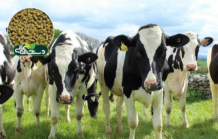 کنسانتره گاو غیرشیری (خوراک تلیسه و گاو خشک) دستچین جهت تغذیه گوساله ماده 6 ماهه تا قبل از آبستنی و تغذیه گاو خشک طراحی شده است