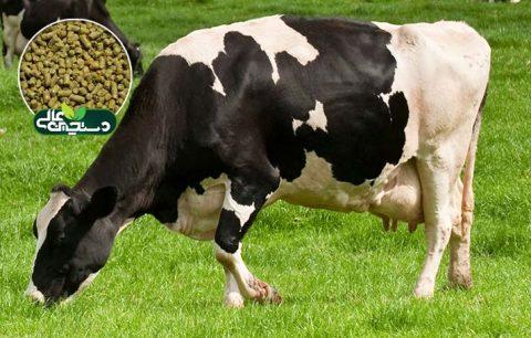کنسانتره گاو شیری سوپرشیر دستچین جهت تغذیه گاو شیری پرتولید با توان تولید 35 کیلوگرم شیر به بالا طراحی و تولید شده است.