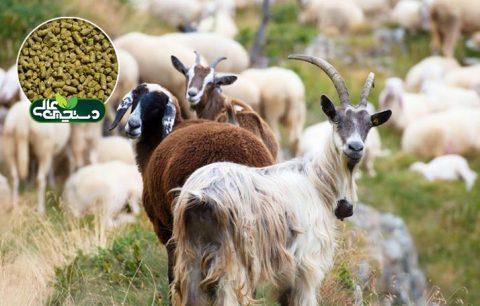 کنسانتره عمومی گوسفند و بز