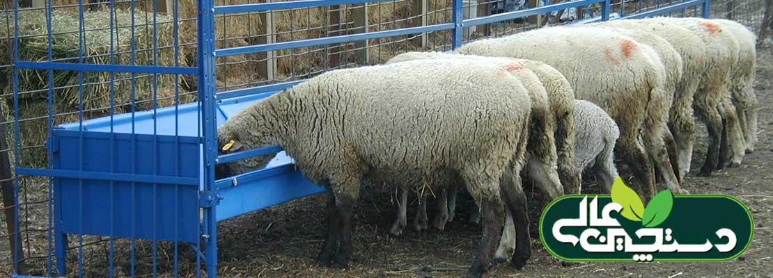 مشخصات و اندازه های استاندارد تجهیزات تغذیه گوسفند، تجهیزات آبخوری گوسفند و ویژگیهای انبار نگهداری علوفه و خوراک برای پرورش گوسفند و بز