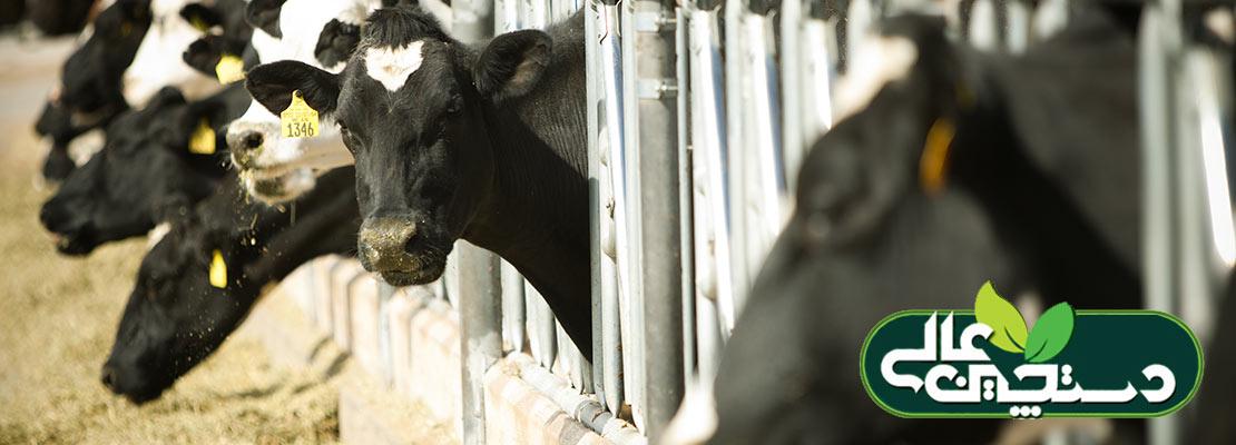 خرید تضمینی دام از دامداران و حمایت از تولید و اشتغال داخلی به جای واردات گوشت و حمایت از اشتغال و تولید خارجی