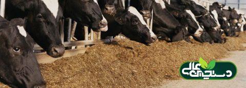 کاهش هزینه تولید خوراک دام با تهیه منابع جدید