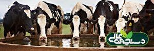 آب مصرفی گاوداری از نظر کیفیت و مواد مغذی موجود در آن