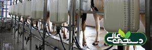 پروتئین جیره گاو شیری را متوازن کنید
