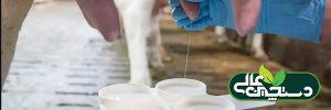 تشخیص ورم پستان گاو شیری توسط کارکنان گاوداری