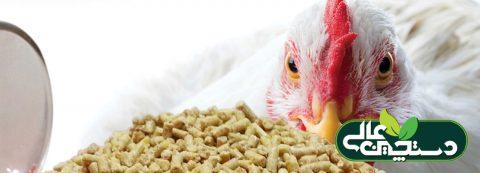 صادرات خوراک دام و طیور در شرایطی که خوارک دام مصرفی کشور از محل ذرت و سویای وارداتی با ارز ۴۲۰۰ تومانی تولید و برای تامین تولید کنندگان داخلی ضروری است!