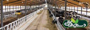 خنک کردن گاو خشک در فصل تنش گرمایی سودآور است