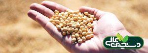 فرآوری دانه سویا و خدمات تخصصی دام طیور آبزیان