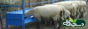 بیماری اسیدوز در گوسفند و بز (شناخت، تشخیص، پیشگیری و درمان)