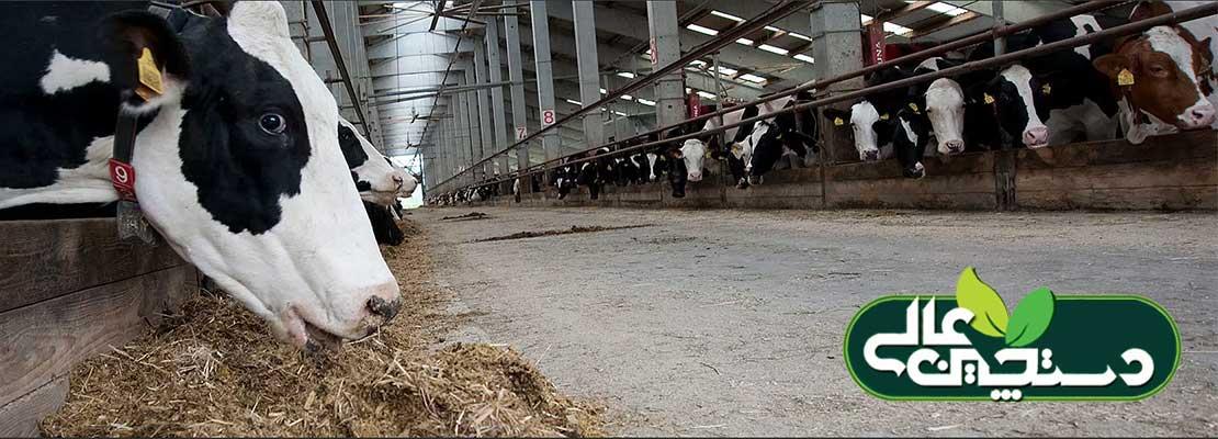 تشخیص کتوز و درمان کتوز تحت بالینی در گاوها به ابزار و شیوه تشخیص نیاز دارد