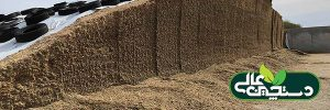 علوفه تخمیری یک منبع خوراک با ارزش برای گاوهای تازه زا