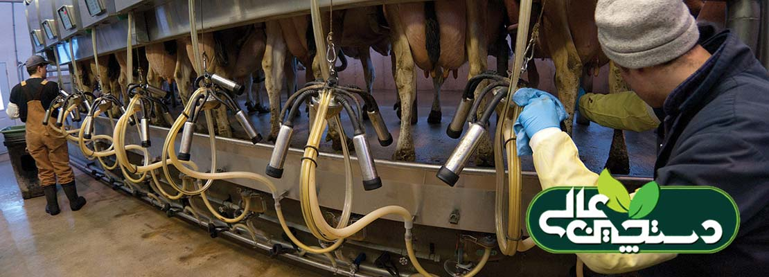 سامانه شیردوش گاوداری را به درستی مدیریت کنید