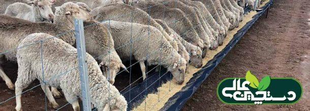 بیماری اسیدوز در گوسفند و بز (شناخت، پیشگیری، تشخیص و درمان)