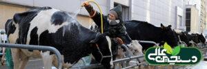 بار میکروبی شیر را برای تولید شیر باکیفیت کنترل کنید