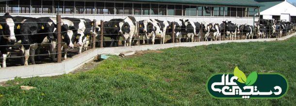 باروری گاو شیری