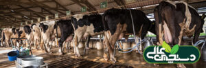 سالن شیردوشی گاوداری