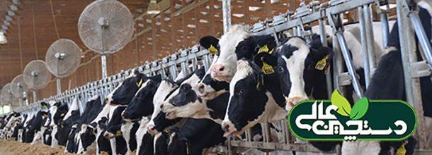 دوره خشکی گاو شیری و اثر تنش گرمایی